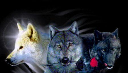 Vrienden van de wolf